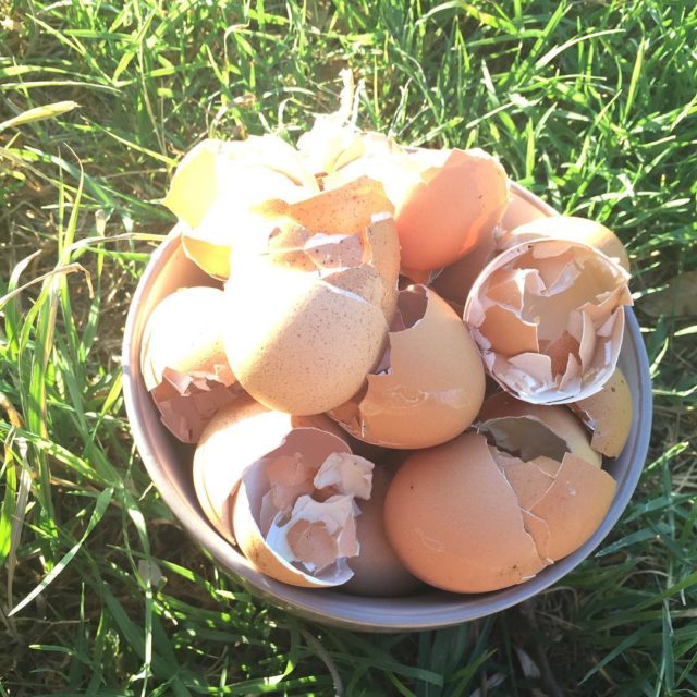tbt to when my chickens were laying eggs and Idhellip